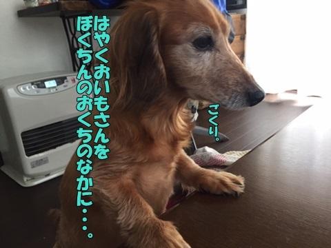 image512170404.jpg