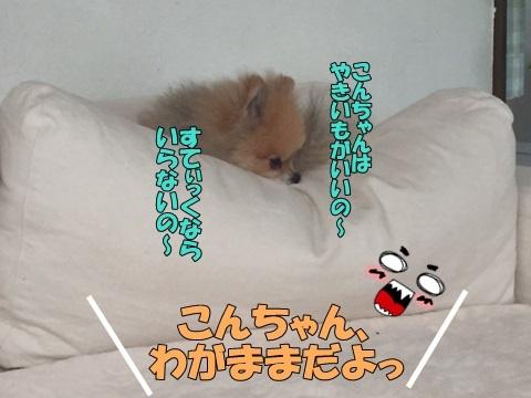 image51801117100101.jpg