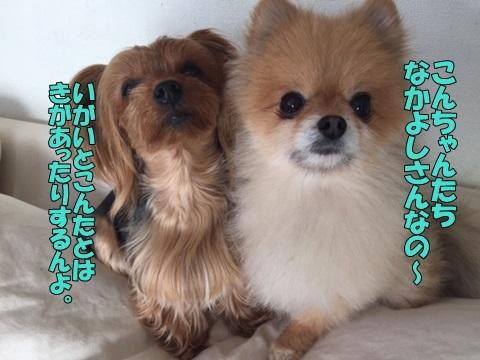 image601030404.jpg