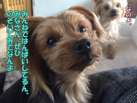 image801080203.jpg