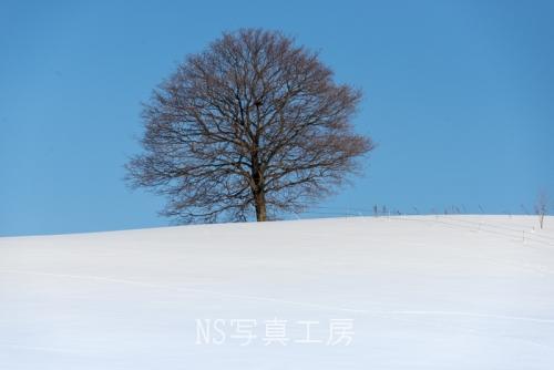_DSC1605.jpg