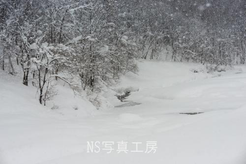 _DSC1729.jpg
