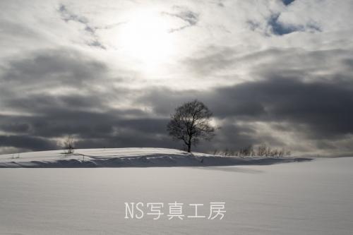 _DSY4907.jpg