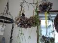 ナンフェア ドライフラワーの紫陽花