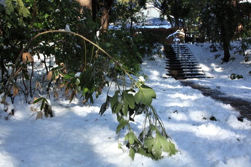 国分寺の雪景色 - 26