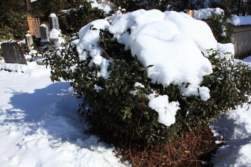国分寺の雪景色 - 11