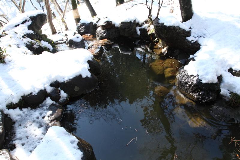 国分寺の雪景色 - 107