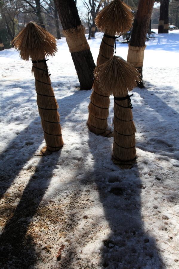 国分寺の雪景色 - 141