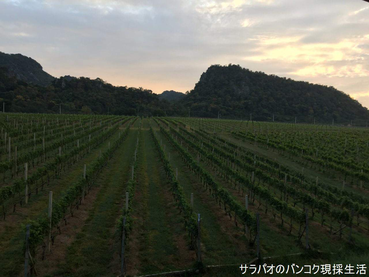 グランモンテ・ワイン・コテージはぶどう園にある宿泊施設 in カオヤイ