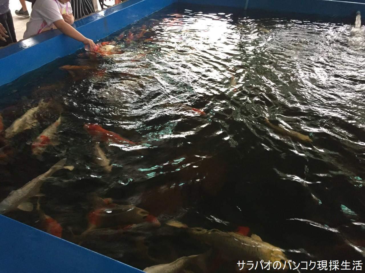 KhlongLatMaYomFloatingMarket_53.jpg