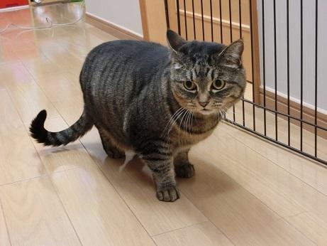 mujiko (3)