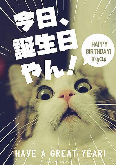 ネコの誕生日