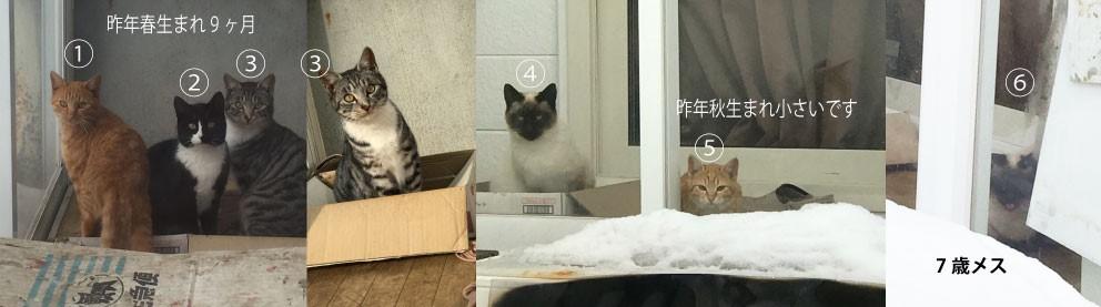nishioka01.jpg
