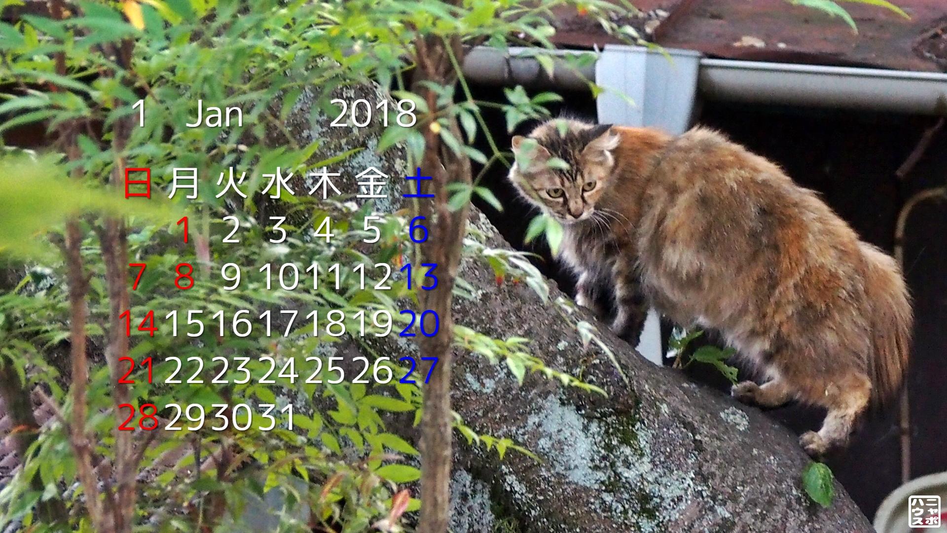 2018年1月 猫デスクトップカレンダー