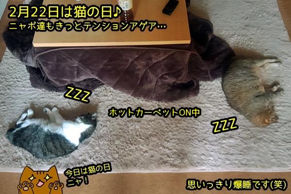 猫の日も爆睡