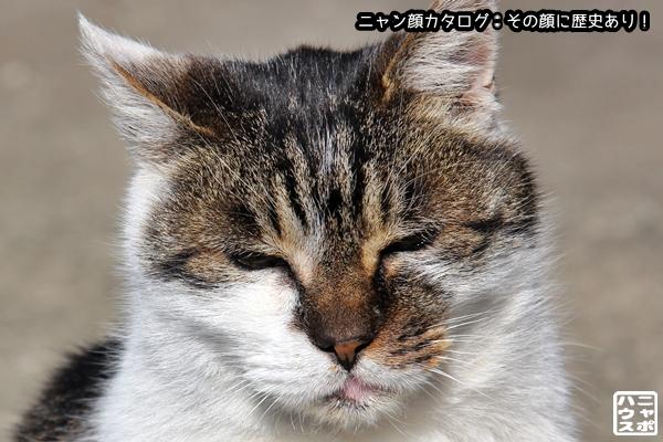 ニャン顔NO133 サバトラ猫さん