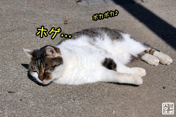 ウニュウニュ サバトラ猫