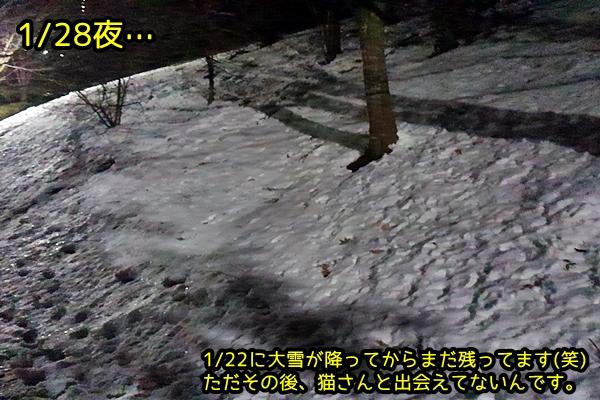 1/22 大雪