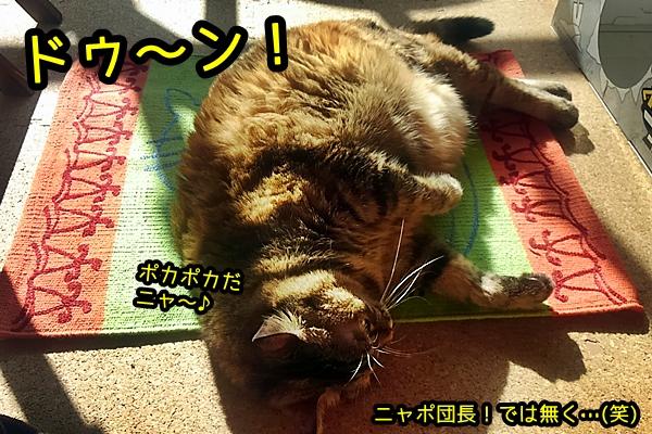 猫 お腹 ハゲ