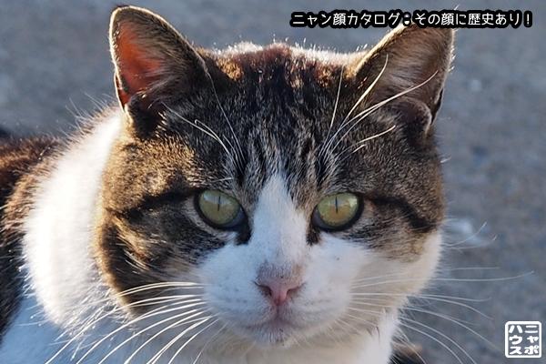 ニャン顔NO128 サバトラ猫さん