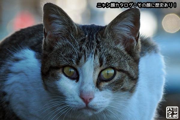 ニャン顔NO135 サバトラ猫さん