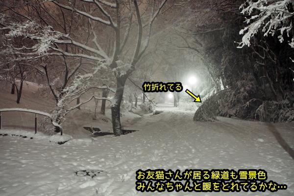 横浜 緑道雪景色