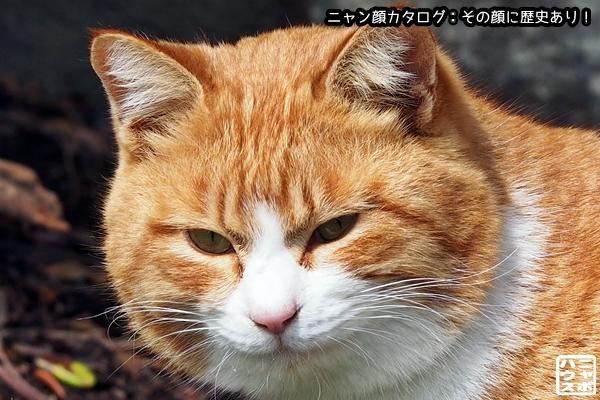 ニャン顔NO134 チャトラ猫さん