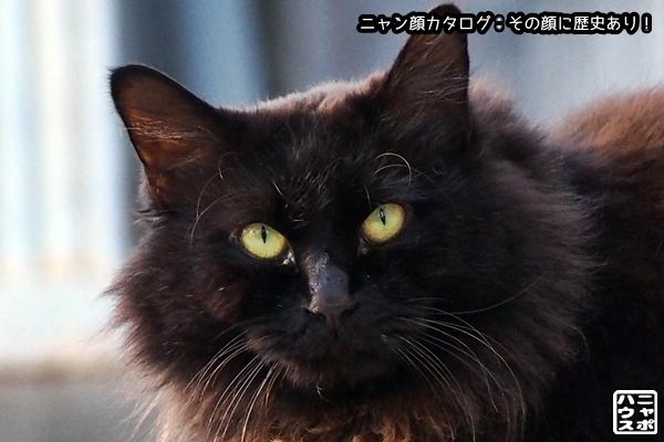 ニャン顔NO126 クロ猫さん