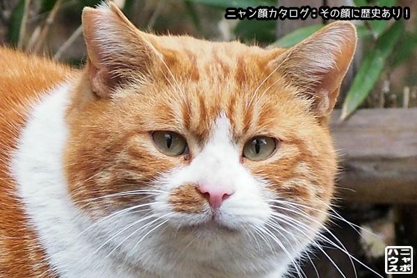 ニャン顔NO127 チャトラ猫さん