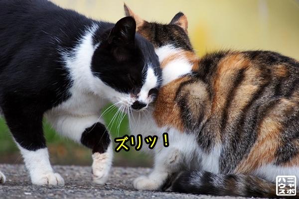 猫 あいさつ