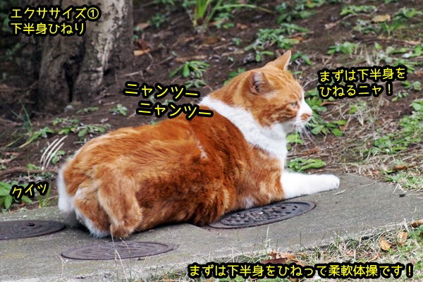 デブ猫 運動