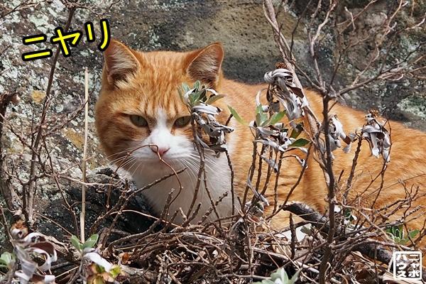 崖登るチャトラ猫さん