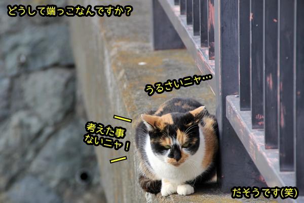 猫 端っこ