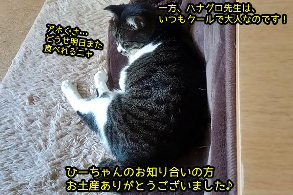 猫用ジャーキー