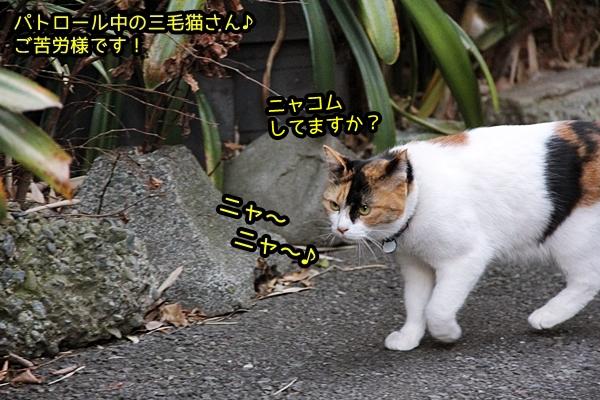 三毛猫さんのパトロール