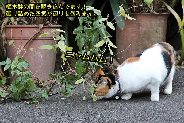 三毛猫さんパトロール