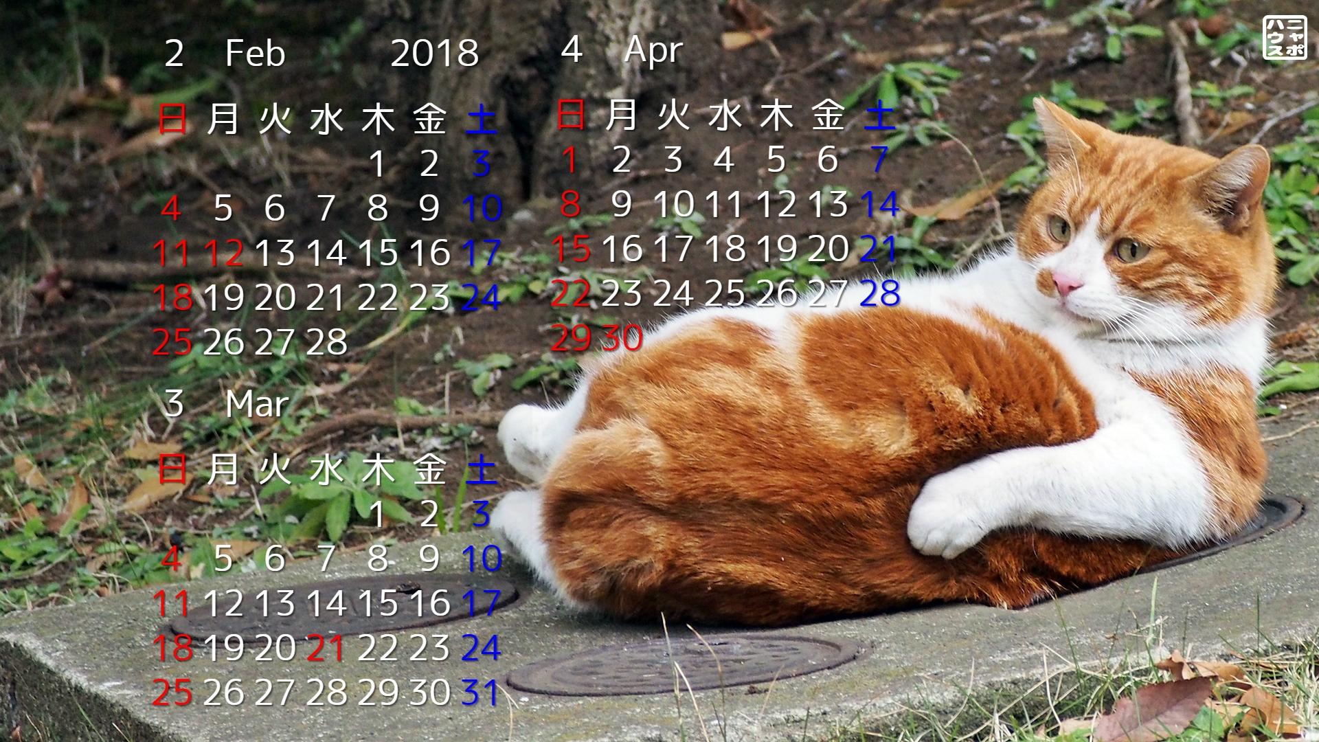 2018年2 4月の猫デスクトップカレンダー おデブなチャトラ猫さん