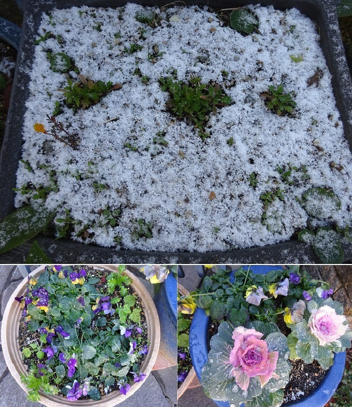 凍り付いた花と雪