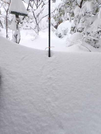 大雪庭80cm