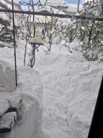 大雪とヒヨドリ