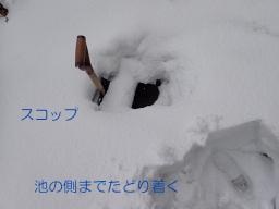 池周りの雪1