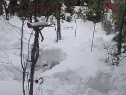 池周りの雪3