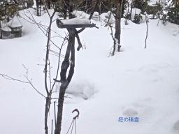 池周りの雪0
