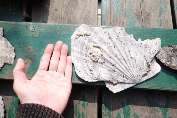 回の化石3