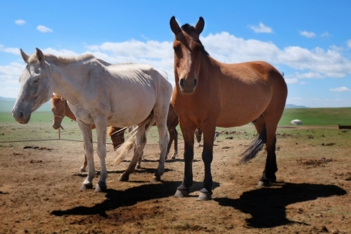 Horse1435646.jpg