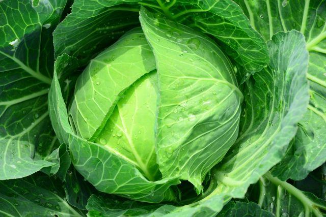 【悲報】野菜の高騰が続く…キャベツ1玉「1000円」の店まで現れる