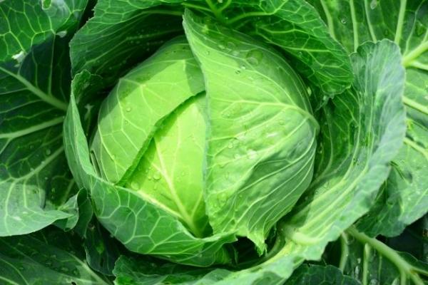 cabbage78578.jpg