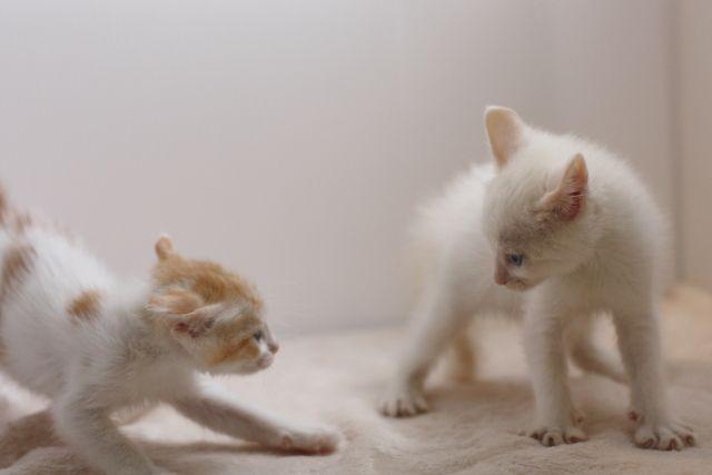 【ペット】2年後に「猫」の寿命が倍になるかも…腎不全から猫を救う特効薬のおかげで「寿命30歳」に