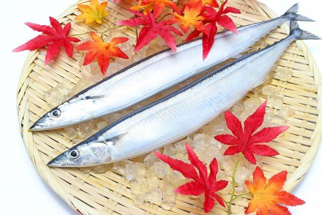 【海】今秋のサンマが「歴史的大不漁」漁場がより沖合に移動…3年連続で大不漁
