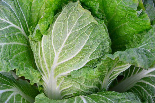 【野菜高騰】白菜が「約800円」大根やキャベツは「約600円」に!異常な値上がり、生活に直撃